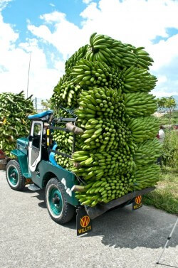 Yipao carrying green plantains